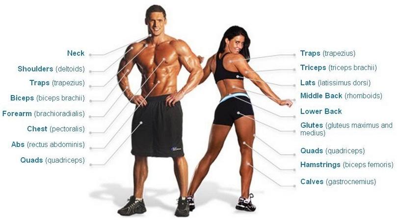 Hiểu các thuật ngữ gym, các chỉ số, nhóm cơ